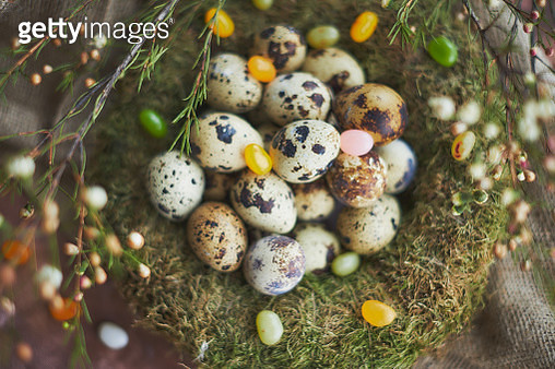 Easter arrangement with quail eggs and moss - gettyimageskorea
