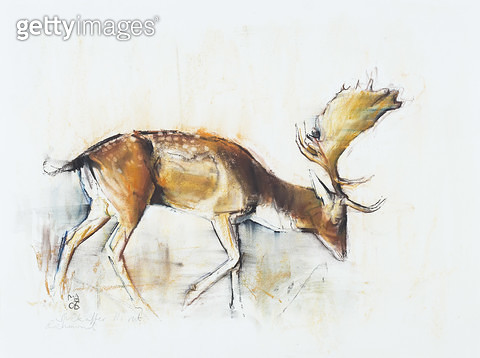 <b>Title</b> : Pisanello Buck, 2006 (charcoal & conte on paper)<br><b>Medium</b> : charcoal and conte on paper<br><b>Location</b> : Private Collection<br> - gettyimageskorea
