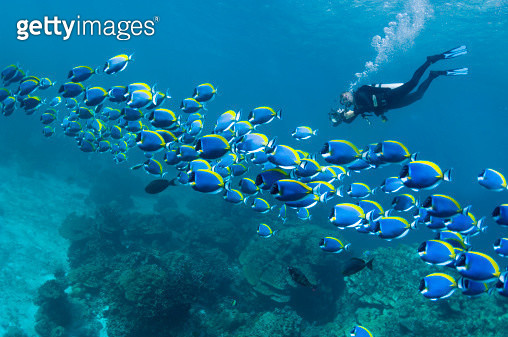 Scuba diver with camera - gettyimageskorea