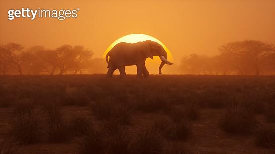 Lonely elephant walking at sunset - gettyimageskorea