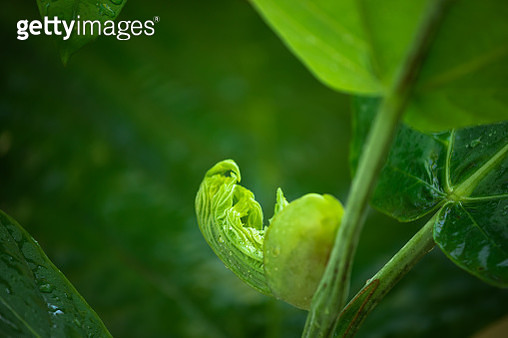 New leaf wet with raindrops - gettyimageskorea