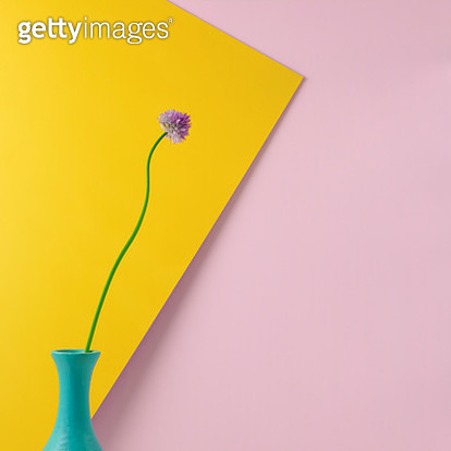 Still life arrangement of a single purple chive blossom in a teal vase against a yellow and pink color-blocked background. - gettyimageskorea