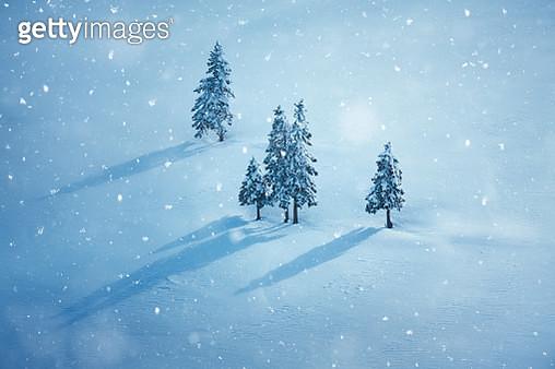 Winter Trees - gettyimageskorea