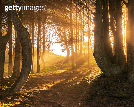 Sun beams in bright and foggy Autumn Forest - gettyimageskorea
