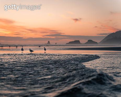 Seagulls on the Oregon coast - gettyimageskorea