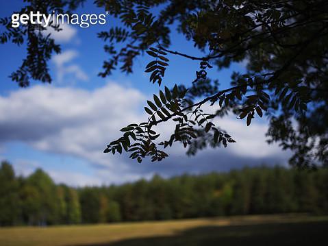 Idyllic rural summer scenery - gettyimageskorea