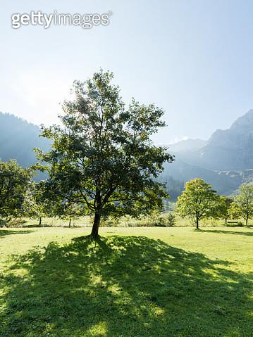 Bayerische Alpen - Großer Ahornboden - gettyimageskorea