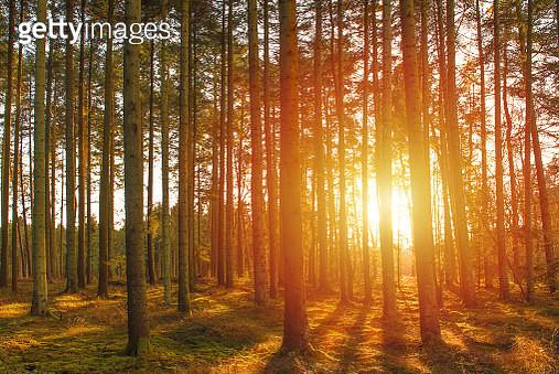 Autumn Sunrise - gettyimageskorea