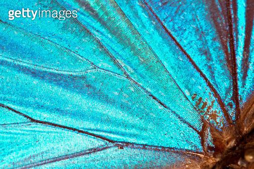 Butterfly wing background - gettyimageskorea