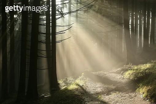 Path Through An Autumn Forest At Dawn - gettyimageskorea
