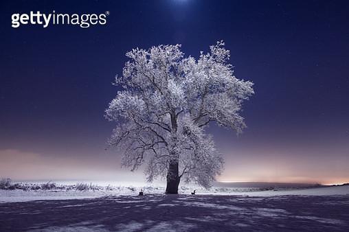 Frozen Trees and Snowy Winter Scene in Rural Pennsylvania - gettyimageskorea