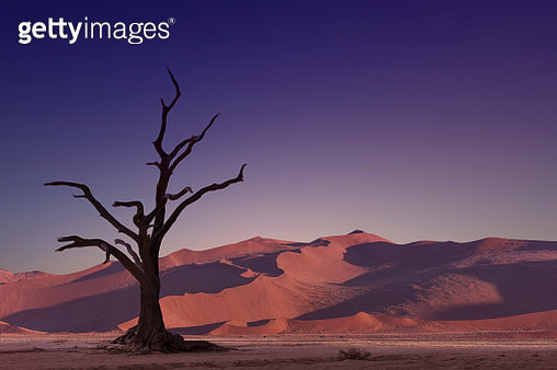 An isolated dried tree under a giant sand dune in the desert. - gettyimageskorea