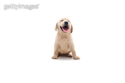 happy dog - gettyimageskorea