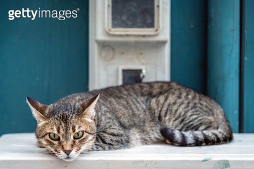 Cat lying on a white surface - gettyimageskorea