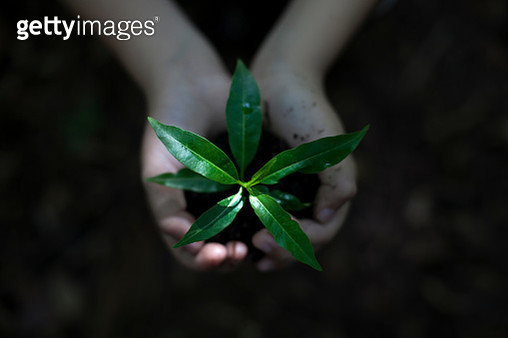 Close-Up Of Hand Holding Plant - gettyimageskorea