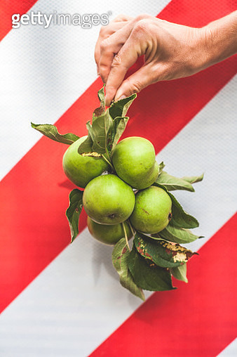 A branch of foraged green apples are held against a background diagonal red and white stripes. - gettyimageskorea