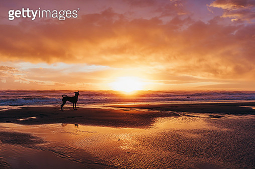 cute puppy playing at the beach at sunset - gettyimageskorea