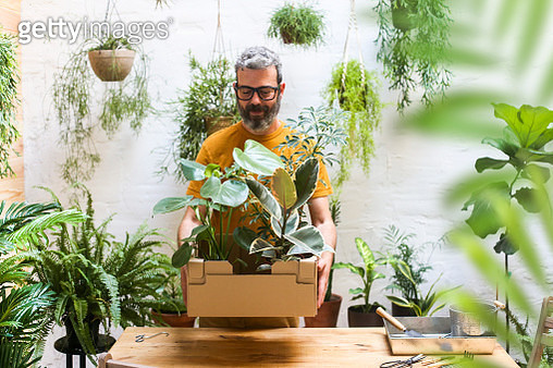 Man holding cardboard box with new plants for his terrace. - gettyimageskorea