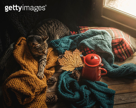 Cat And Wool Sweaters - gettyimageskorea