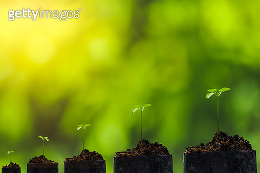 Close-Up Of Small Plant Outdoors - gettyimageskorea