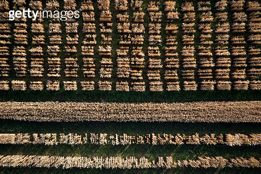 Aerial view agricultural trial fields, Hohenheim, Baden-Wuerttemberg, Germany - gettyimageskorea