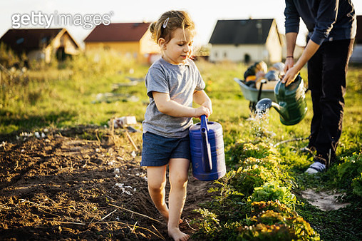 Young Girl Helping Father Water Plots On Small Urban Farm - gettyimageskorea