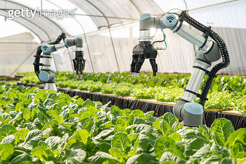 Smart robotic farmers in agriculture futuristic robot automation to vegetable farm,Smart farm concept - gettyimageskorea