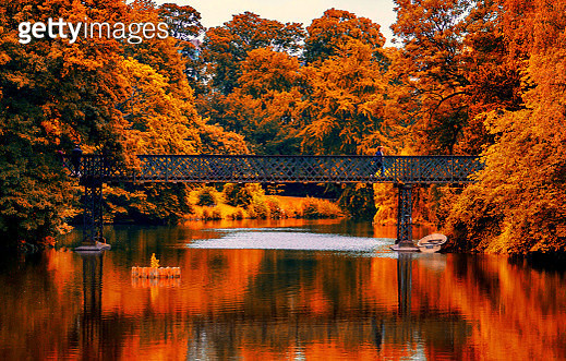 Trees By Lake During Autumn - gettyimageskorea