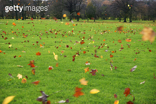 Lots of leaves blown by the strong wind - gettyimageskorea