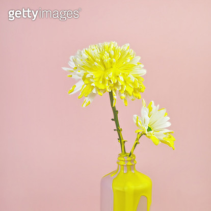 White Mum and Daisy Flowers with Yellow Dripping Paint - gettyimageskorea