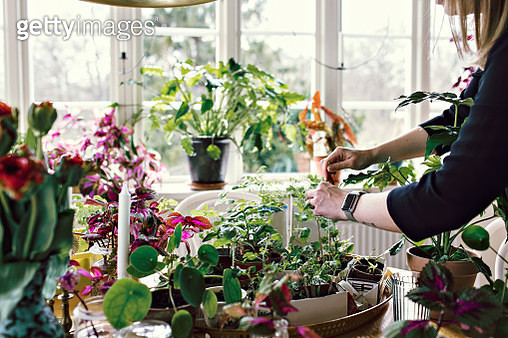 Midsection of woman planting on table at home - gettyimageskorea