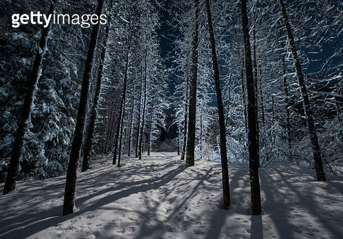 Bare trees growing on snowy field in forest during night - gettyimageskorea