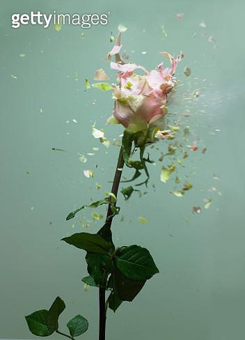 Exploding flowers - gettyimageskorea