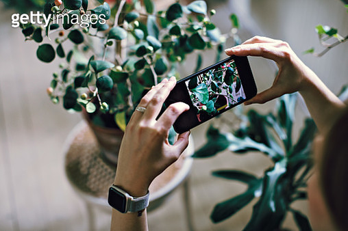 Cropped image of woman photographing potted plant at home - gettyimageskorea