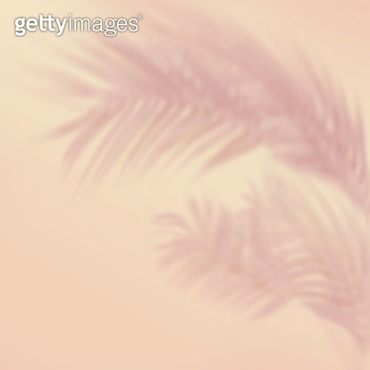 Shadow of palm leaves in pastel color - gettyimageskorea