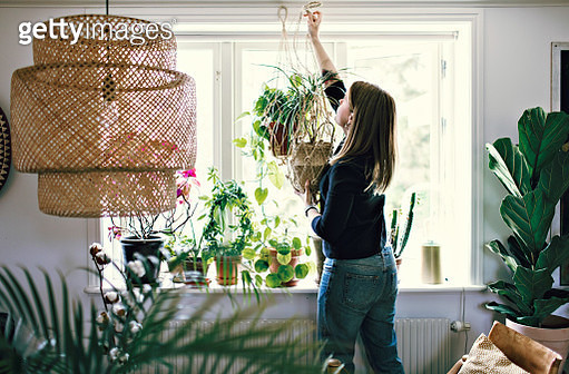 Mid adult female environmentalist hanging potted plant on window in room at home - gettyimageskorea
