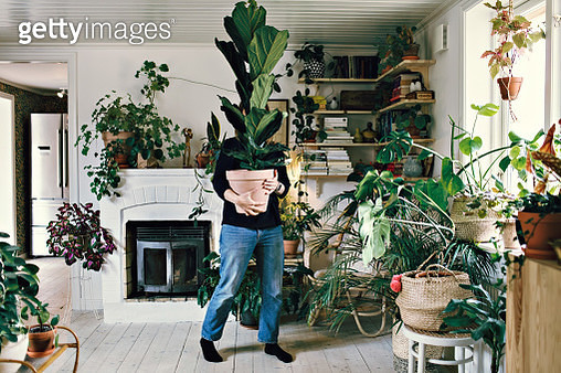 Full length of woman carrying potted plant at home - gettyimageskorea