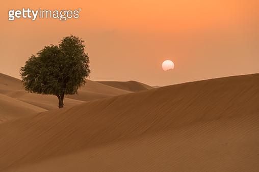 Sunset on the desert at UAE - gettyimageskorea