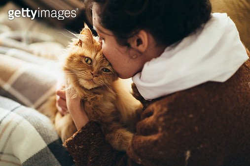 Woman kissing cute cat's head. Tender scene. - gettyimageskorea