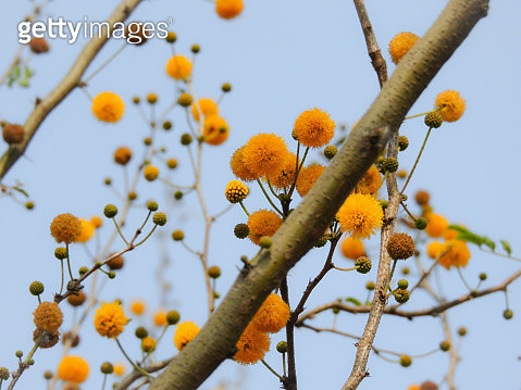 Low Angle View Of Flowering Plant Against Clear Sky - gettyimageskorea