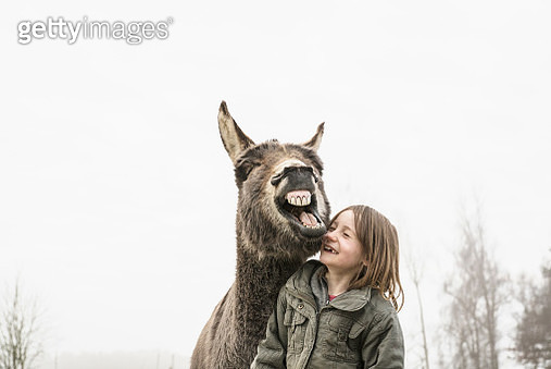 Playful girl and donkey - gettyimageskorea