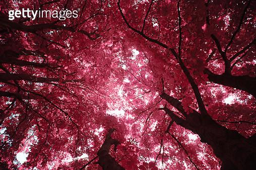 Sunlight filtering through trees foliage - gettyimageskorea