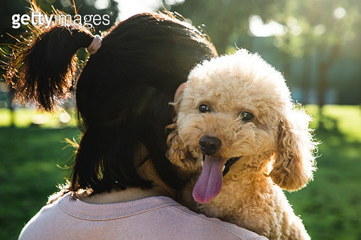 Asian woman with a poodle dog in a park - gettyimageskorea