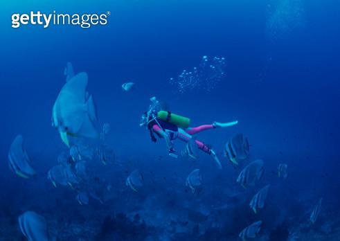 Diving - gettyimageskorea