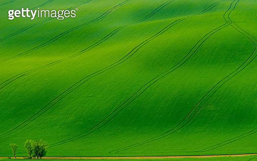 Moravian Rolling Fields - gettyimageskorea