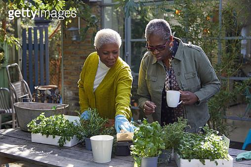 Two Senior women gardening together - gettyimageskorea