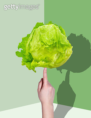 Hand Holding lettuce with a shadow - gettyimageskorea
