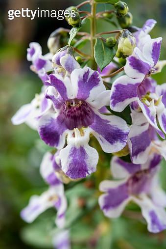 orchid - gettyimageskorea