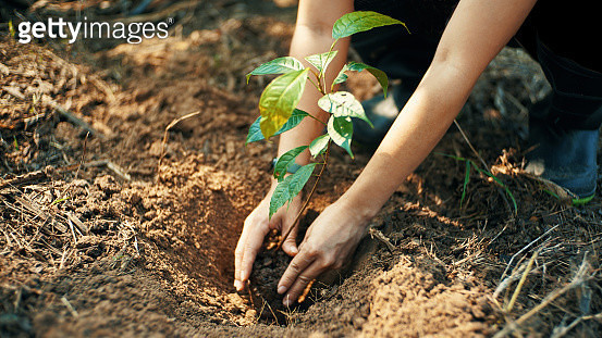 Plant for the earth - gettyimageskorea