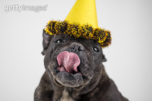 Dog with party hat - gettyimageskorea
